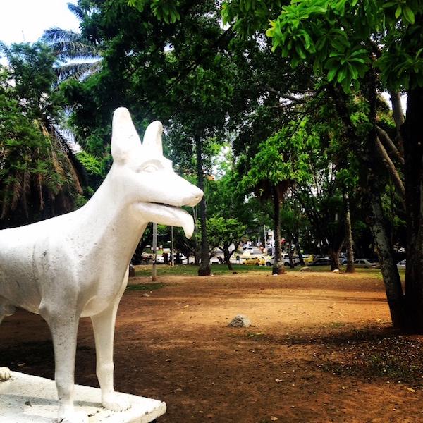 Parque del perro in cali students bars restaurants for Ahuyentar perros del jardin