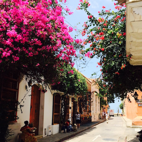 The streets of Cartagena old town are bursting with colour and life. The multi-coloured bougainvillea compete with the pastel shades of the colonial-era buildings.