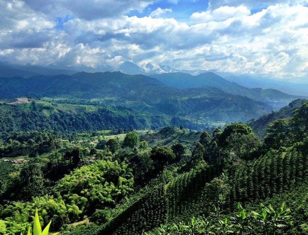 One of our favourite things to do in Colombia is soak up the views in the Unesco World Heritage designated Coffee Region. The rolling green hills, planted with coffee trees as far as the eye can see, are like a picture-postcard. (Photo courtesy of our friends at Campesino Specialty Coffee )